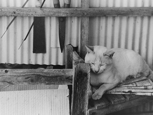 猫も一休みブログ