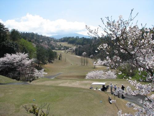 コースの桜