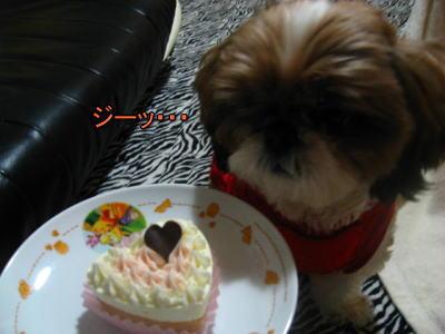 2010・バレンタイン4