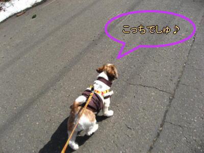 4・2散歩10
