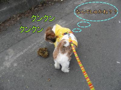 11日お散歩4