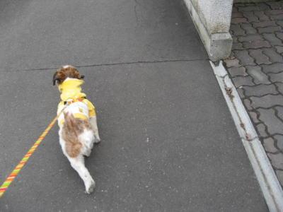 11日散歩