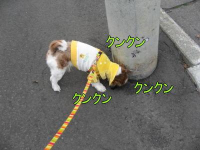 11日お散歩2