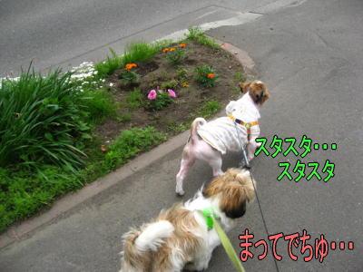 9日散歩3