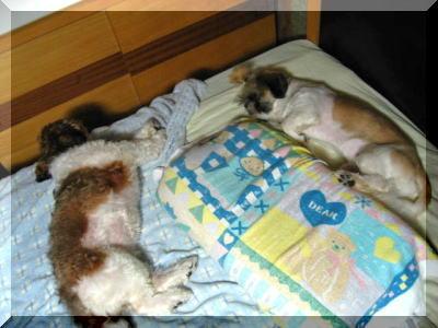 寝る時は仲良し!?2