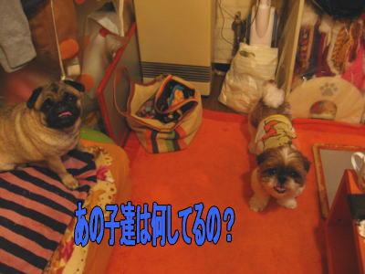 マロン&ココアママ宅12