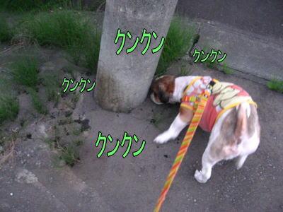 タッチのお散歩2