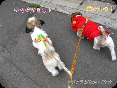 掃除&お散歩6