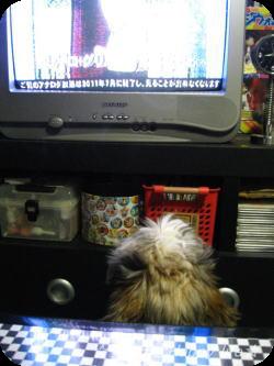 テレビ好き