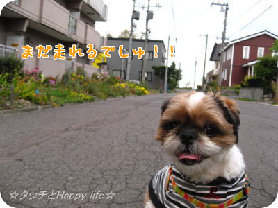 楽しいお散歩5