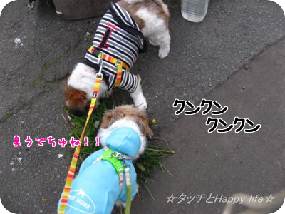 楽しいお散歩3