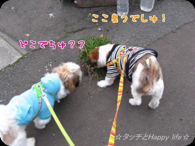 楽しいお散歩2