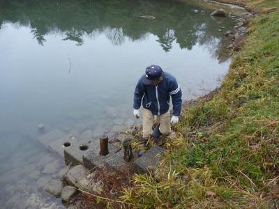 中溜 斜樋による水位調節