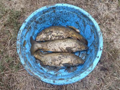 中溜 採集された魚類 (一部)