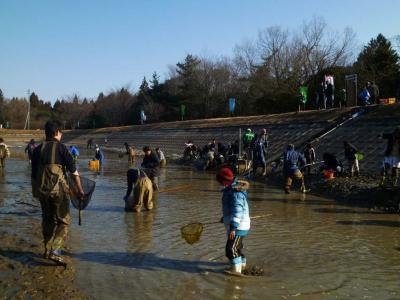 高塚溜 ため池の生き物採集