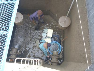 写真.5 集水ます内にて魚類の回収v2