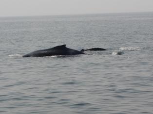 鯨と初対面