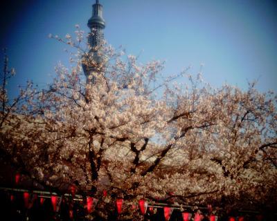 東京スカイツリーと桜2012C:Entry