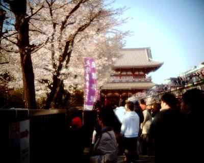 浅草寺と桜:Entry
