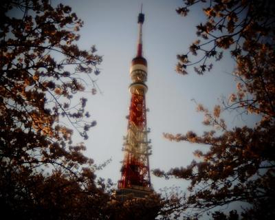 桜に包まれた東京タワー:Entry