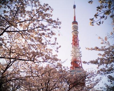 桜の中の東京タワー:R2
