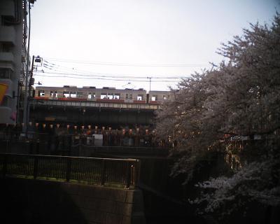 サクラと東横線:R2