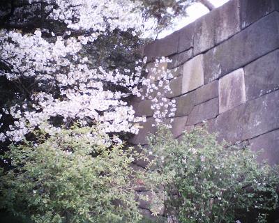 石垣と桜:R2