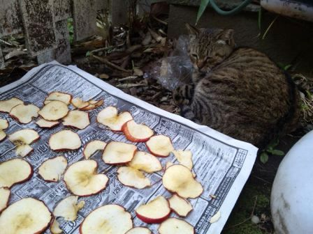 りんごときじ