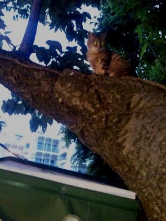 木登りきじこ