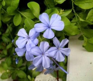 裏口のお花