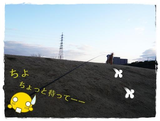 P1070084a.jpg