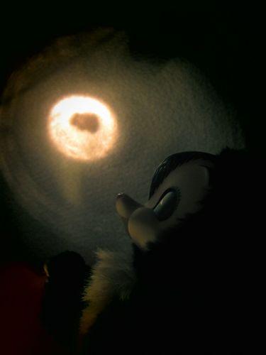 moonlight_2.jpg