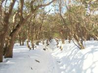 雪の道、木のトンネル
