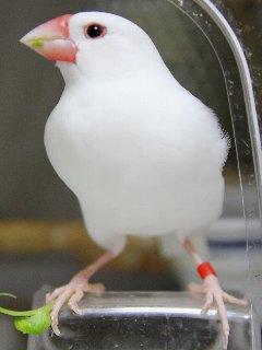 放鳥嬉しいなぁ~♪
