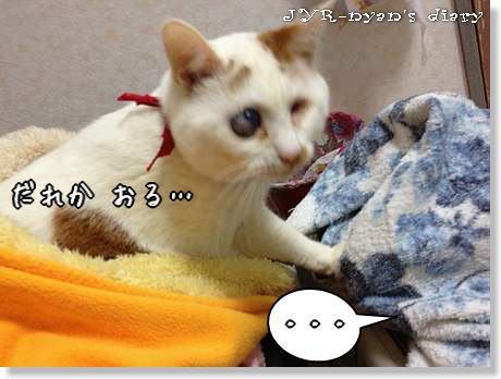 daichi130222_3