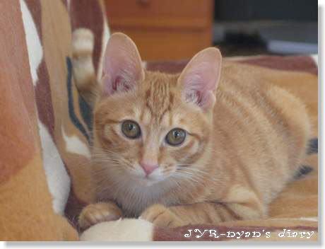 shizuku130307_2