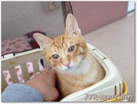 shizuku130331_4