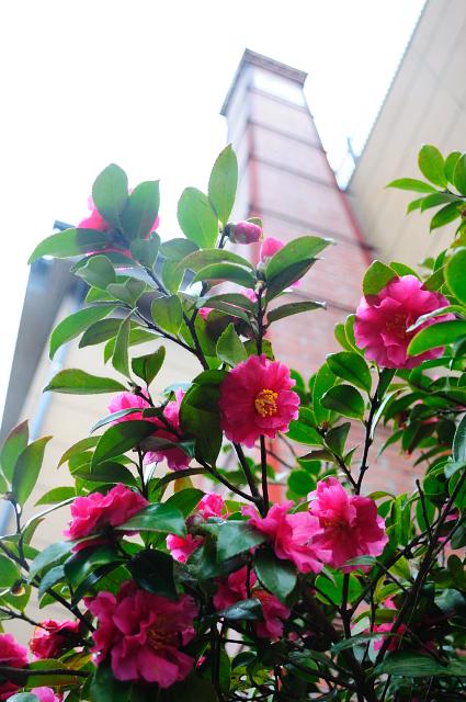 biwako_068.jpg