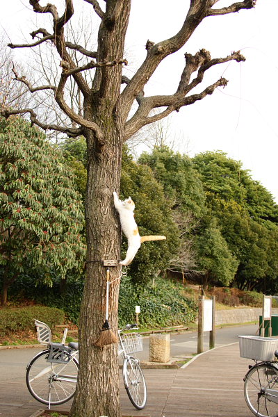 つかさのブログ-公園の猫