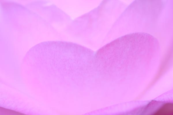 つかさのブログ-バレンタイン花