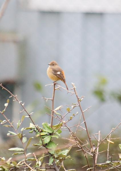 つかさのブログ-城南島鳥