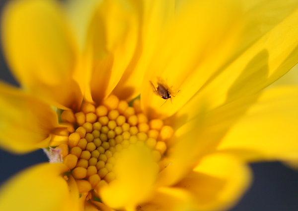 つかさのブログ-花マクロ
