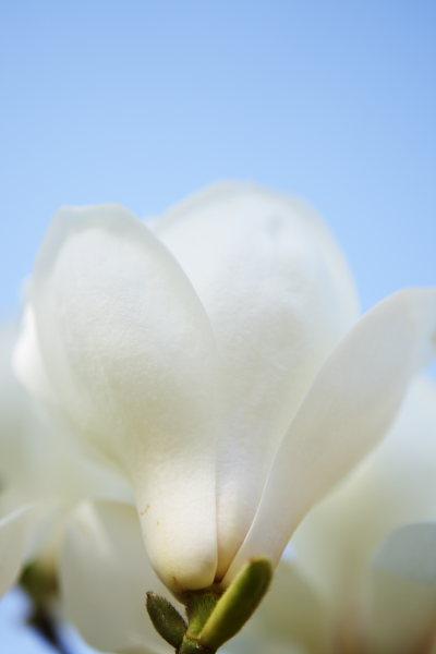 つかさのブログ-品川水族館