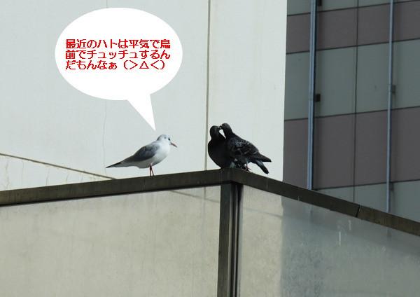 つかさのブログ-鳥ギャグ