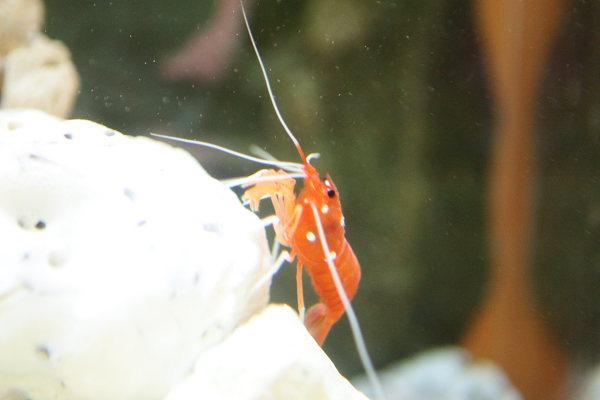 つかさのブログ-水族館