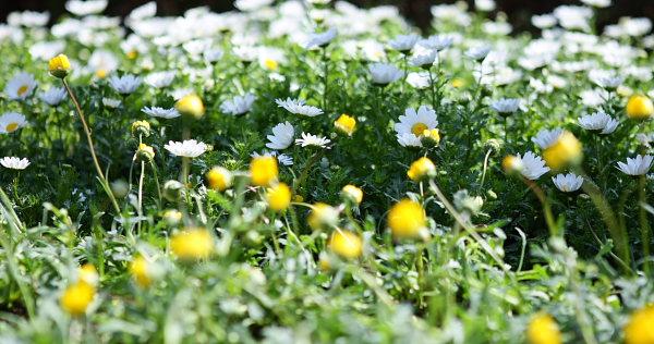 つかさのブログ-花畑