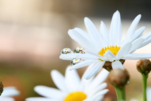 つかさのブログ-水滴