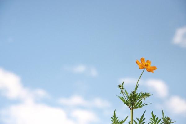つかさのブログ-0909土手の花