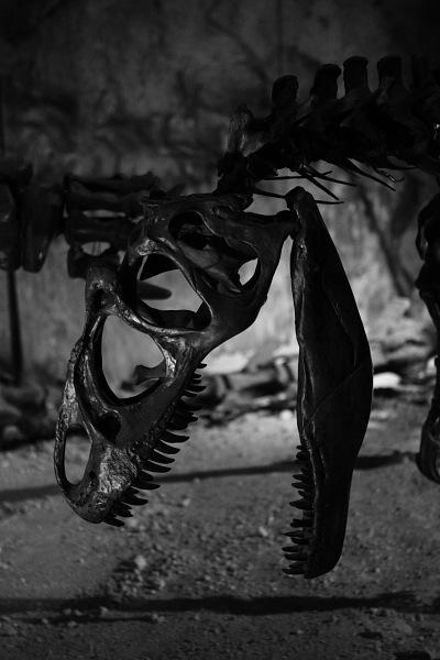 つかさのブログ-09恐竜展