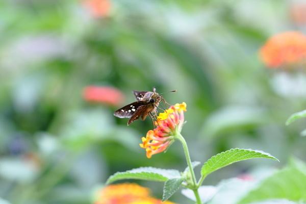 つかさのブログ-秋の虫